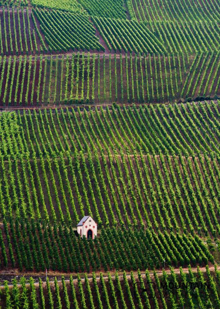 6 Steep vineyards in lush summer green